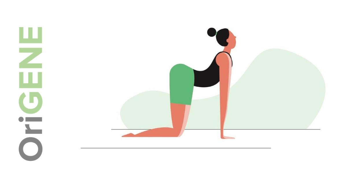 Hausaufgabenübung für Nacken und Rücken